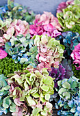 Colour mix of hydrangea flowers and ornamental cabbage