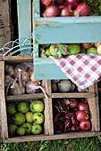 Holzkiste mit Zwiebeln, grünen Äpfelchen und Knoblauch