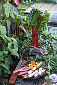 Chard and basket with small garden tools and freshly harvested carrots