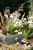 Easter decoration with grape hyacinths, checkerboard flowers and stuffed primrose in a drawer, pheasant feathers and branch of Cherry plum blossoms as decoration