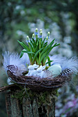 Easter basket with grape hyacinths, Easter bunnies, Easter eggs, and feathers on a tree stump in the garden