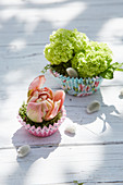 Small spring decoration with hydrangea flowers and filled tulips in muffin cases