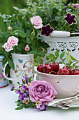 Roses and violas next to small bowl of cherries in front of miniature roses and petunias