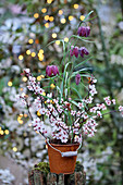 Snake's head fritillaries in small, rusty bucket decorated with cherry plum blossom