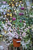 Schachbrettblume im rostigen Eimerchen, dekoriert mit Blütenzweigen der Blutpflaume