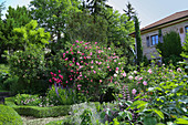 Mediterranean garden with blooming roses