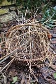 Basket with branches: Cornelian cherry 'Gourmet-Dirndl'