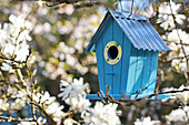 Bird nesting box hung in flowering star magnolia