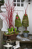 Basket with hyacinths and branches of coral dogwood and moss trees in front of the house entrance