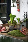 Hyacinths, bird house, and moss on the patio table