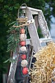 DIY-Vogelfutterstation an Leiter hängend