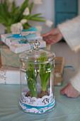 Hyazinthen mit Tortenspitze im Glasgefäß mit Deckel