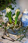 Hyazinthen mit Moos und Perlenkette als weihnachtliche Tischdekoration