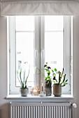 Zimmerpflanze, Vasen und Kerzen am Fenster