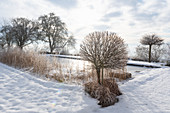 Snow-covered garden with frozen swimming pond