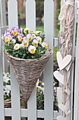Basket of violas on garden fence with welcoming wooden love-hearts