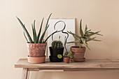 Zimmerpflanzen und DIY-Zeichnung im Bilderrahmen auf Holzbank