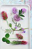 Blüten von Rotklee, Inkarnatklee, Purpur-Klee und Futterwicke