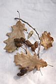 Oak leaves and alder cones
