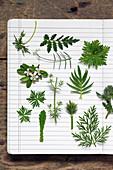Verschiedene grüne Blätter (Geranie, Farn, Helebora, Salvia) auf Schulheft