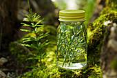 Herbal distillate of field horsetail in water
