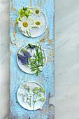 Blüten von Margerite, Raps, ähriger Teufelskralle, Hornkraut und Leimkraut