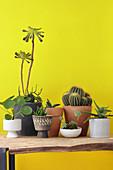 Blumentöpfe mit Sukkulenten und Kaktus