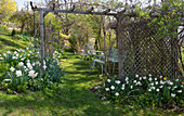 Slope garden with white daffodils, pergola, and a seating area