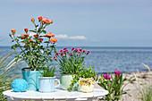 Pot plants on a table on the beach