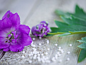 Lilac delphinium flowers on a wooden surface