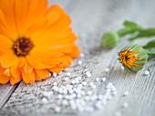 Blüte von Ringelblume auf Holzuntergrund