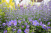 A flowering bed of perennial's in a garden
