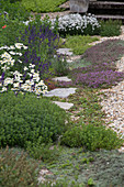 A herb garden with lavender and thyme