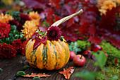 Pumpkin and chrysanthemums