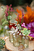 Succulent cuttings in tiny bottles