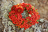 Wreath of pyracantha berries