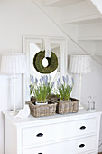 Grape hyacinths in baskets on white chest of drawers