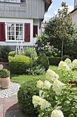 Front garden with box balls, hydrangeas, autumn anemone and cranesbill
