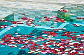 Swimming Pool with Rose Petals, San Miguel de Allende, Guanajuato, Mexico