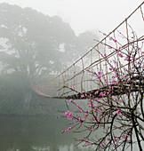 Fußgängerbrücke über einen nebligen Fluss, Lao Cai, Vietnam