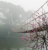 Footbridge Suspended Over a Foggy River,Lao Cai, Vietnam