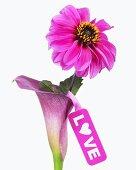 Calla 'Pink Diamond' und Dahlie 'Annika' mit Anhänger