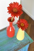 Red gerberas in red and yellow vases on a blue cupboard