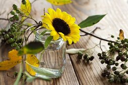 Sunflowers in a jar with chokeberries