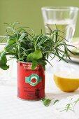 A tomato tin as a herb vase