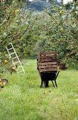Holzkisten mit Äpfeln auf einer Schubkarre