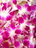 Thai orchids (edible flowers)