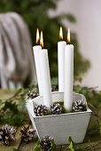 Candles in wooden box with frosted fir cones and moss