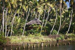 A hut hidden in the jungle near a river