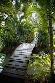 A curved wooden bridge in a rainforest